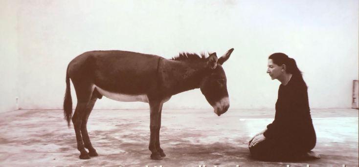 marina-abramovic-donkey-femalegazesite.wordpress.com